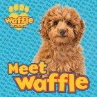 Meet Waffle!