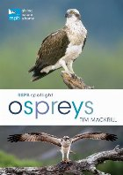 RSPB Spotlight Ospreys