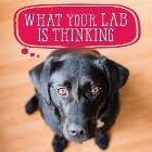 What Your Lab Is Thinking