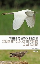 Where To Watch Birds in Somerset, Gloucestershire and Wiltsh